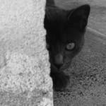 black cat symbol of bad luck