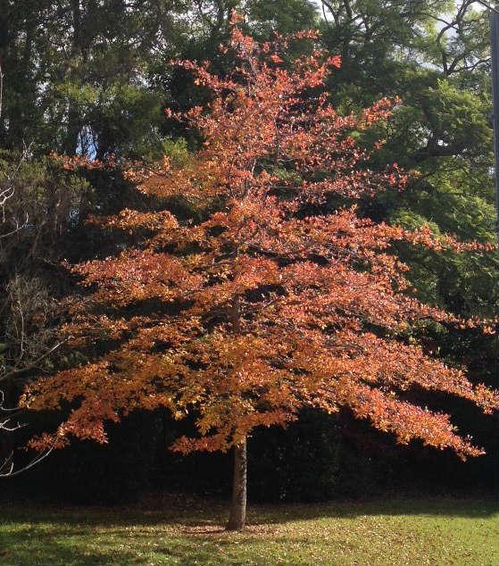 trees dressed in autumn colour